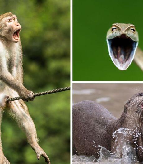 Les photos animalières les plus drôles de 2021