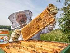 Honing van alleen maar Zeeuwse zwarte bes bloesem