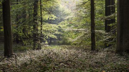 Wandelaars zoeken lenteprikkels in bos
