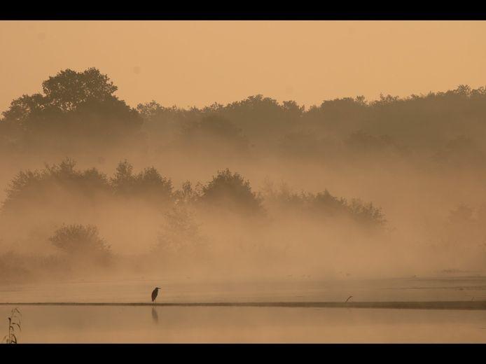 De winnende foto van een reiger in de vroege ochtend aan het water.