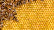 Honing proeven met Okra