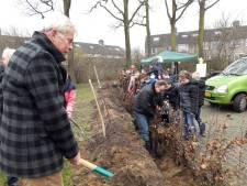 Leerlingen Vossenhol Groesbeek planten beukenhaag