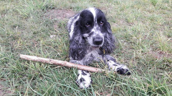 Leuk een hond, maar die hondenbelasting is wat minder prettig. Grave wil ervan af.