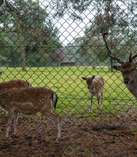 Strijd om hertenkamp Epe ontbrandt: 'opknapbeurt en nieuwe kiosk zijn voldoende'