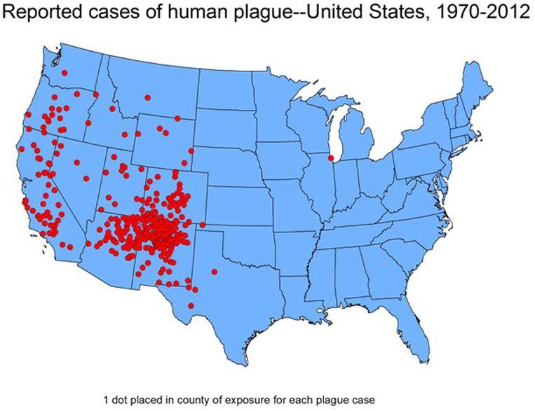 Pestbesmettingen vinden vooral plaats in het landelijke westen van de VS. De ene besmetting in de noordoostelijke staat Illinois vond plaats in een labo. Beeld CDC