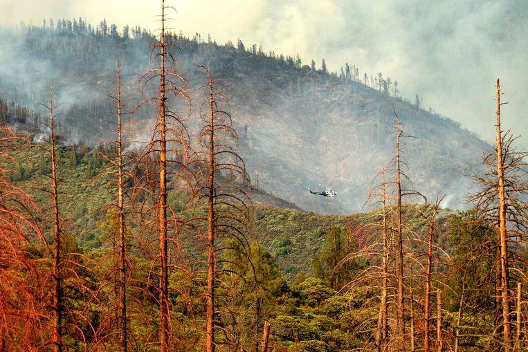 Dode bomen op de voorgrond terwijl op de achtergrond een helikopter met blusmateriaal vliegt boven het Yosemite National Park. Beeld AFP