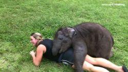 Zin in een knuffel? Voor een hééééle dikke moet je bij dit superschattige olifantje zijn