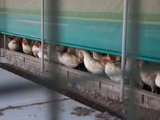 Zeven pluimveebedrijven op slot na gebruik van giftige stof