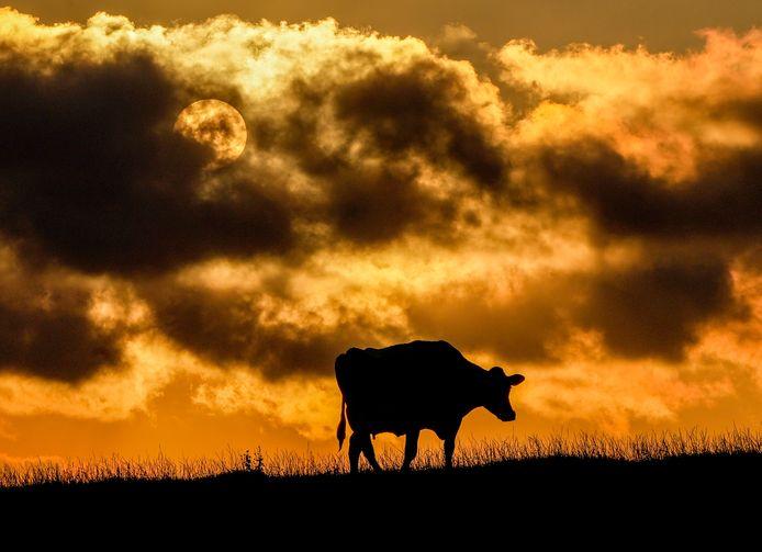 """Les deux cas ont été détectés lors d'inspections sanitaires chez des bovins """"d'âge avancé""""."""