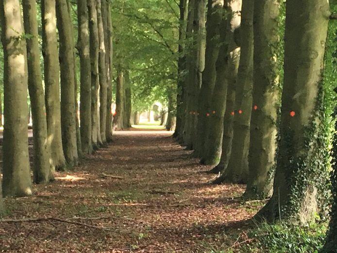 De bomen met een rode stip moeten worden gekapt, is het plan van het Rijksvastgoedbedrijf.