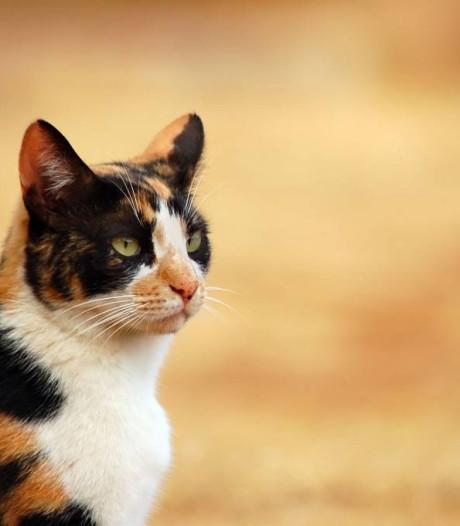 Groen licht voor honden- en kattenpension Looienhoek Riel