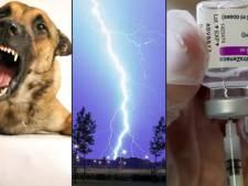 Vous avez bien plus de chances de mourir tué par un chien ou par la foudre qu'après une dose d'AstraZeneca