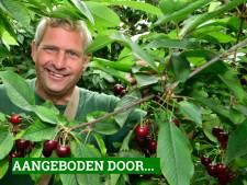 Ariën en Annet hebben een kersenboomgaard in Hekendorp: 'Verser krijg je ze niet'