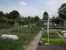 Groenten eten uit moestuinen Sluisdijk toch niet zonder risico; gemeente Helmond adviseert er meteen mee te stoppen