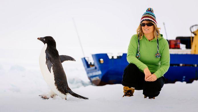 Een passagier van de Akademik Sjokalski kijkt naar een passerende Adelie-pinguin.