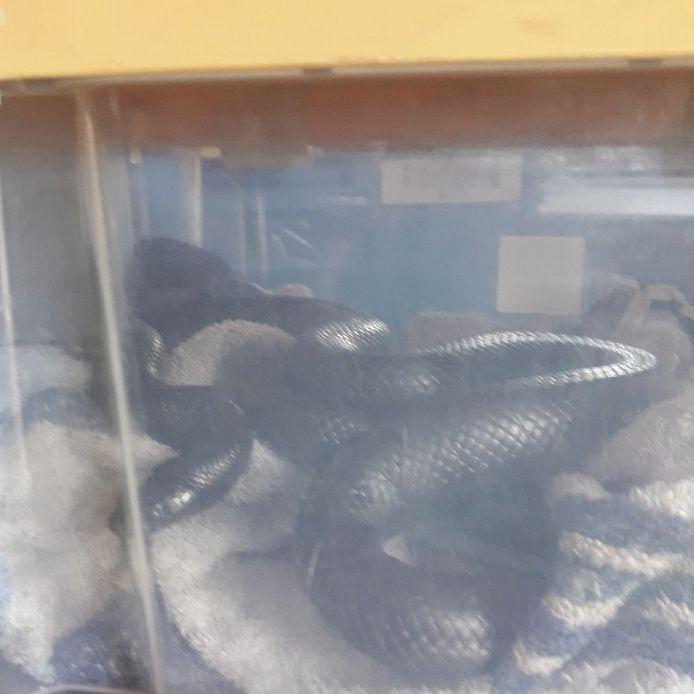 De slang.