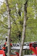 Vrouw half uur lang vast in boom in Voorschoten. Ze klom haar kat achterna.