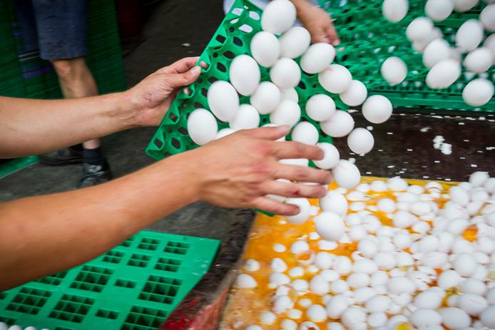 Eieren worden op last van de Nederlandse Voedsel- en Warenautoriteit (NVWA) vernietigd bij een pluimveehouder