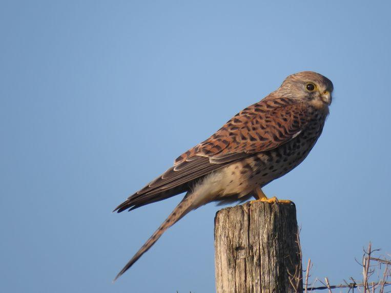 Vogels kijken op Tiengemeten - Trouw