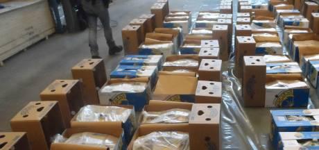 Drie aanhoudingen na vondst 900 kilo coke