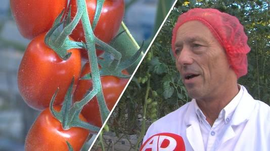 Rik Lootens, tomaten- en paprikaexpert van Syngenta.