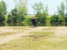 Mogelijke misstanden met grote grazers in Keent leiden tot Kamervragen