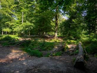 Denk mee over de toekomst van Berkenbossen: Bosgroep stelt ontwerp van beheerplan voor