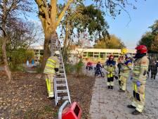 Jochie klimt boom in en durft niet meer naar beneden in Emmeloord, brandweer schiet te hulp