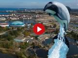 Sluiting dreigt voor het Dolfinarium: 'Is een gemis'