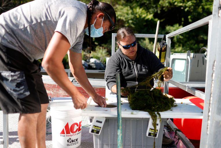 Gilbert Myers (L) en Jamie Holt (R), zoekend naar vis in vallen die zij hebben uitgezet in de Klamathrivier.  Beeld Getty Images
