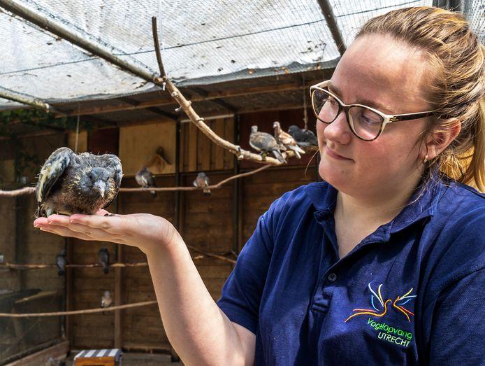 Roos Speelmeijer, van de Stichting Vogelopvang Utrecht in het hok met een van de getroffen jonge houtduiven. Ze verblijven hier sinds de valwind in Leersum.
