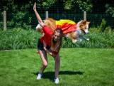#REDCHALLENGE. Van dansend hondje tot Miguel Wiels: Lochristi kleurt volledig rood voor Duivels