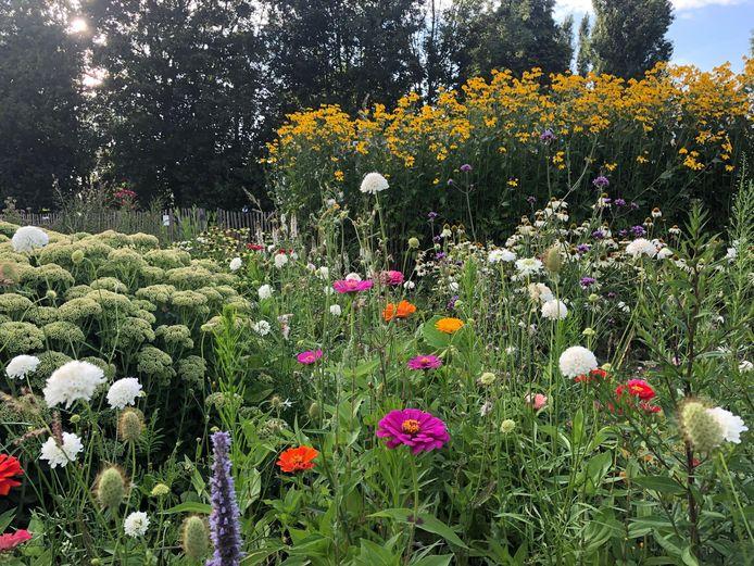 De pluktuin bij camping Markdal - niet openbaar toegankelijk - stond er in het vorige bloeiseizoen nog prachtig bij. Maar wisselvallig weer maakt het voor tuiniers in 2021 behoorlijk lastig om het beste uit hun bloemen te halen.