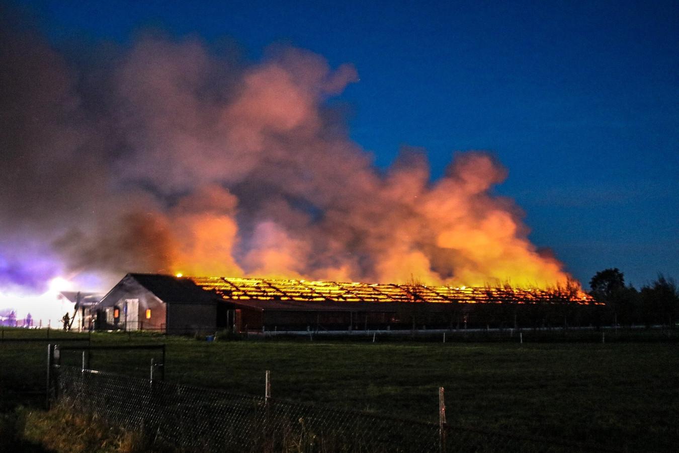 Bij een grote brand in een schuur in Barneveld kwamen 20.000 kippen om het leven