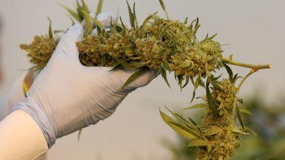 180.000 euro verbeurd verklaard voor cannabisplantage