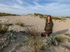 Westland heeft een Nationaal Park naast de deur: 'De natuur heeft hier écht pareltjes'