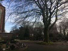 Jorisparochie Eindhoven wil natuurlijke begraafplaats mogelijk maken bij Trudokerk