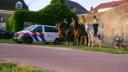 Politie te paard paradeerde door de binnenstad van Harderwijk en stelde zich op aan de kust van het Wolderwijd om jongeren in bedwang te houden.