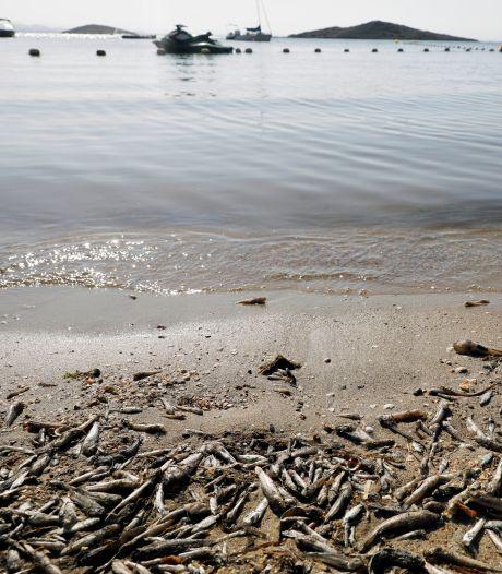 Espagne: des milliers de poissons morts remontent à la surface de la Mar Menor
