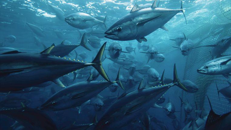 'Hoe verder van de zee, hoe groter de kans op bedrog - aan de kust kennen ze hun vissoorten' Beeld Artgrid
