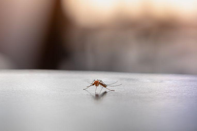 Speciale kleding tegen muggen Beeld Getty Images