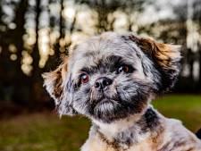 Op zoek naar de schimmige wereld achter hondje Riva: een plek waar geld belangrijker is dan gezondheid