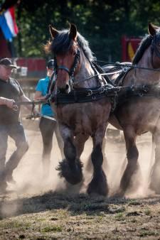 Paardenpower van powerpaarden in Heeswijk