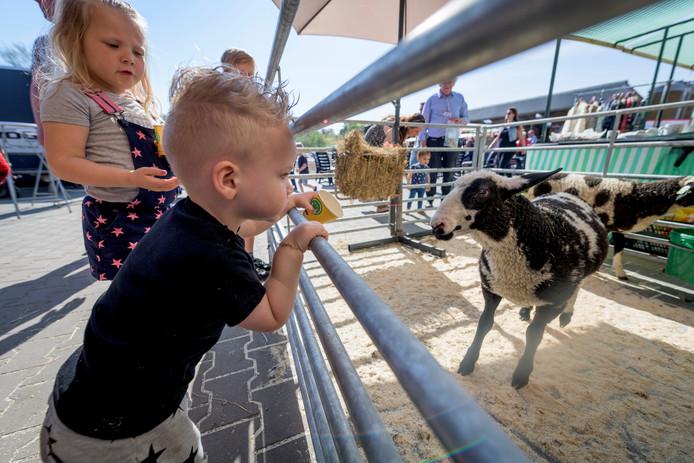 Kinderen met lammetje 10288 op de open dag bij de schaapskooi Haaksbergen. Het verstoten derde lam van een in januari geboren drieling heet voortaan Brammelien.
