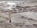 Als alles volgens plan verloopt, kan volgend jaar begonnen worden met het bouwrijp maken van de grond.