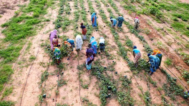 Vrouwen bewerken land bij de Groene Muur in Senegal. Beeld Hollandse Hoogte / Science Photo Library