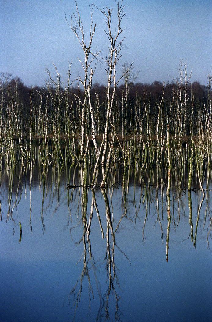 Het onder water zetten van de Peel ten behoeve van de hoogveenvorming is niet de oorzaak van vochtproblemen op aangrenzende weilanden in Liessel, concludeert de Raad van State.