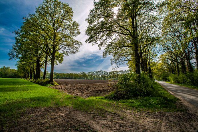 Een doorkijkje in het coulissenlandschap aan de Waterdijk in Deventer. 'Groene' organisaties en bedrijven vrezen voor de vernieling van het traditionele Sallandse coulissenlandschap rond Deventer, als daar te veel ruimte ingenomen gaat worden door zonneparken.