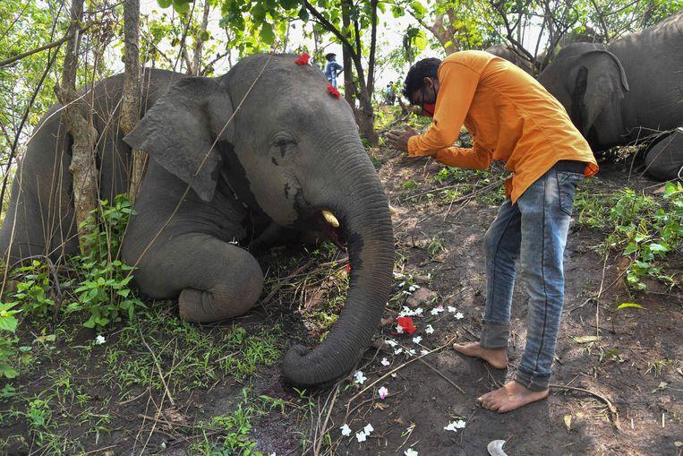 Dorpsbewoners versieren de overleden olifanten met bloemen. Beeld AFP