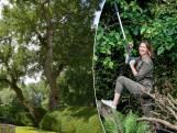 """""""Een specht in je boom is geen goed teken"""": dit zijn de signalen om een boomdokter in te schakelen"""